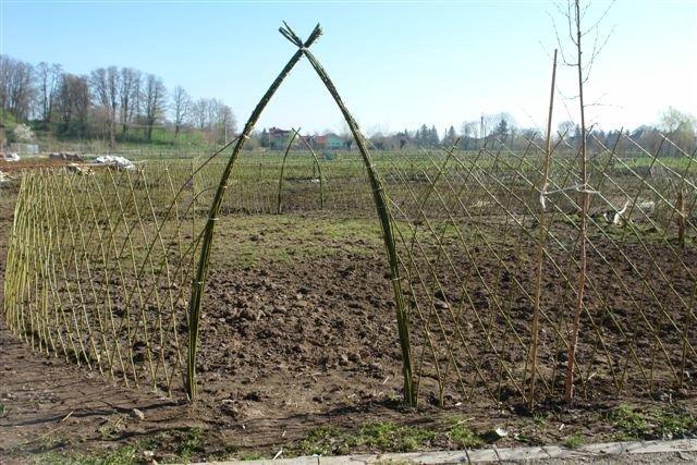 ogród wiklinowy