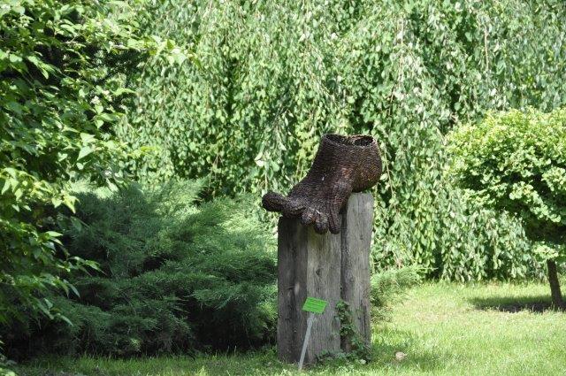 arboretum bolestrzszyce