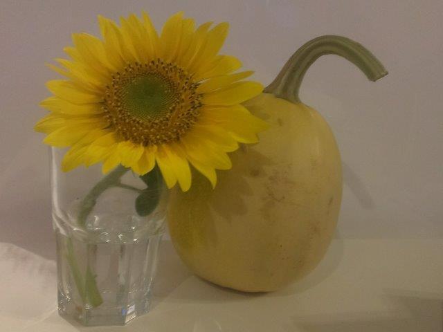 kompozycja z dynią, kwiat słonecznika i dynia makaronowa