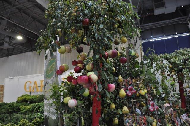 drzewko obwieszone jabłkami na nitkach