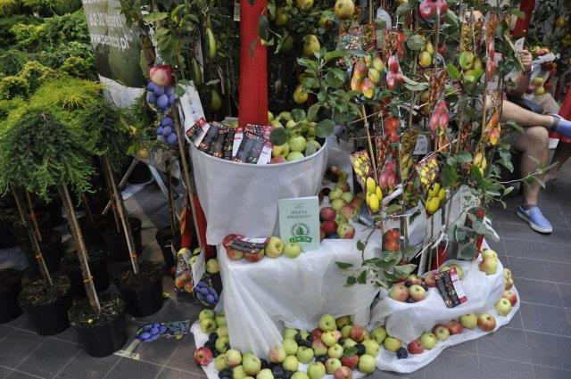 bogactwo starych odmian jabłek