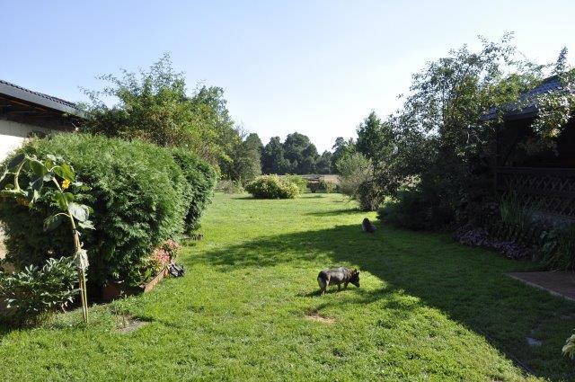 psy w ogrodzie