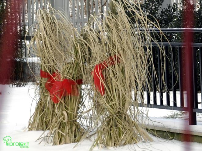 suche trawy związane czerwonymi wstążkami