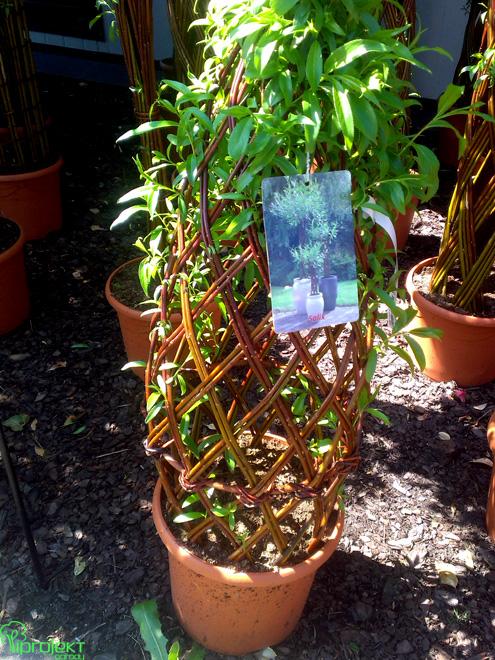 żywa plecionka z wiklinu wiklinowa rzeźba IPROJEKT