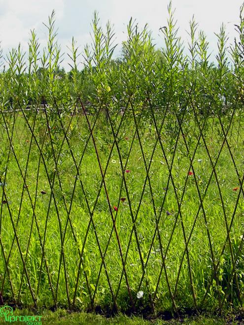 rosnący wiklinowy płot IPROJEKT