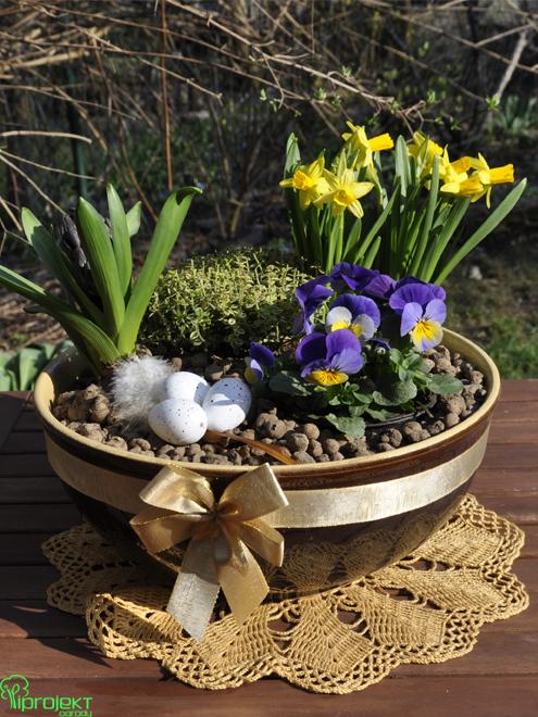 Wielkanocna kompozycja z roślin kwitnących na żółto-niebiesko z kokardą IPROJEKT
