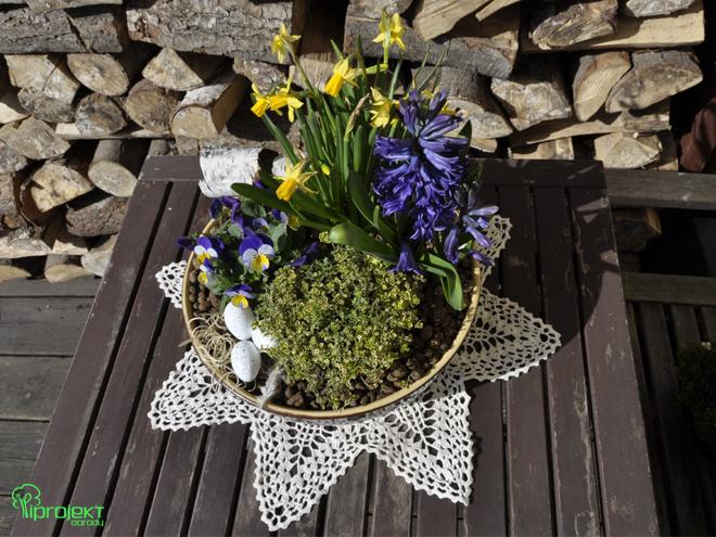 Wielkanocna kompozycja z roślin kwitnących na żółto-niebiesko IPROJEKT