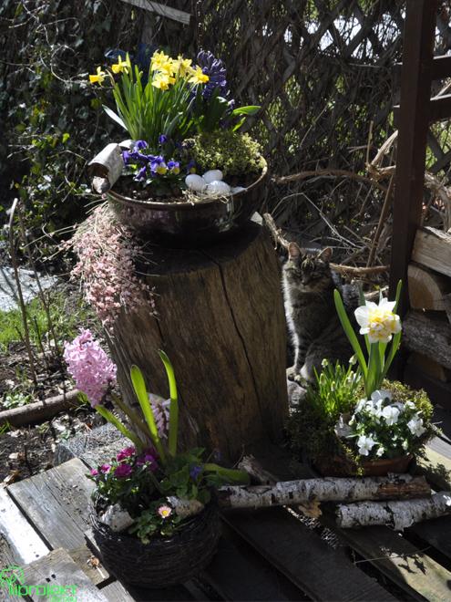 Trzy kompozycje wielkanocne ustawione na tarasie kot w tle