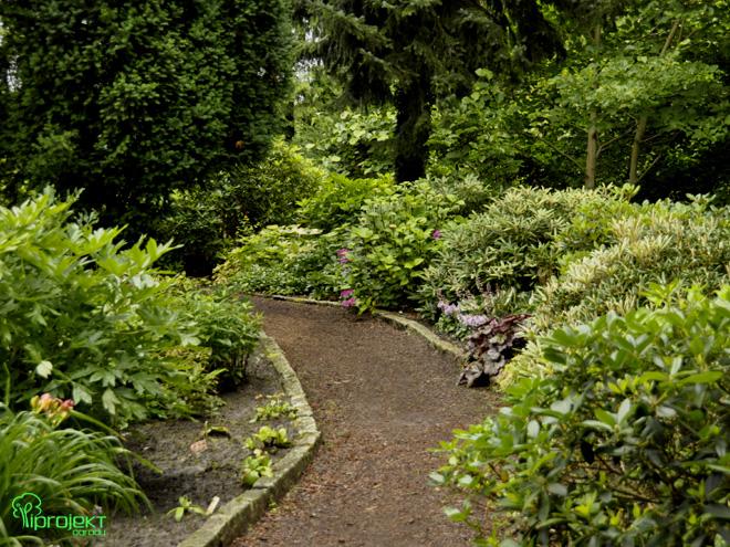 ścieżka wśród rododendronów ogród botaniczny IPROJEKT