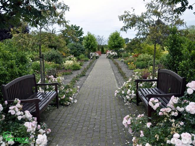 słoneczna slejka z ławkami w różach ogród botaniczny IPROJEKT