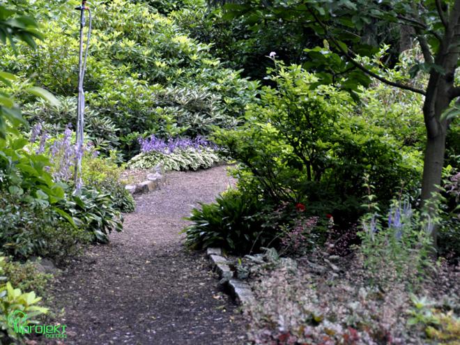 cienista ścieżka wśród funkii ogród botaniczny IPROJEKT