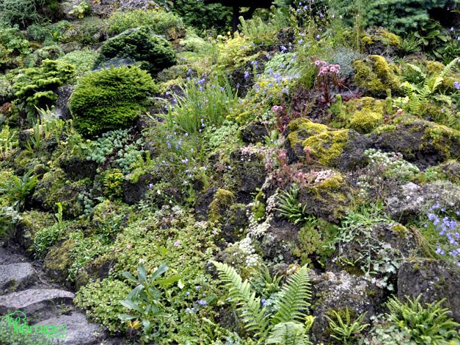 roślinność skalna ogród botaniczny IPROJEKT
