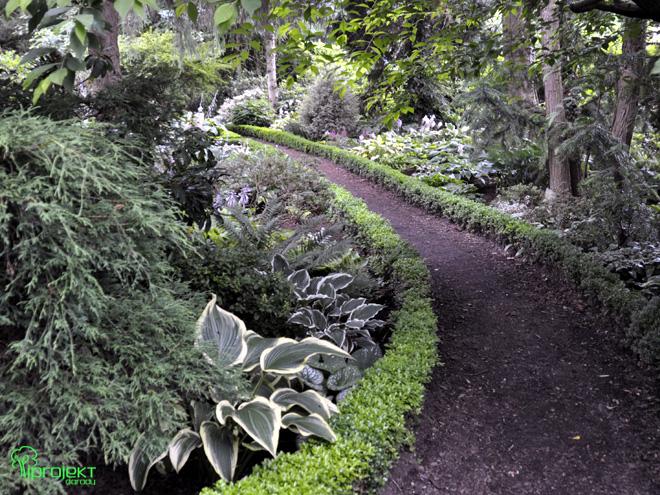 cienista ścieżka z obwódką z bukszpanu ogród botaniczny IPROJEKT