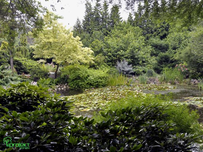 staw z nenufarami ogród botaniczny IPROJEKT