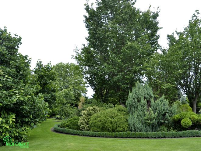 magnoliowy ogród wokół zielonej wyspu ogród botaniczny IPROJEKT
