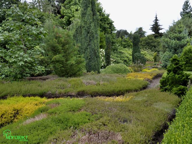 letnie wrzosowisko kolory zieleniogród botaniczny IPROJEKT