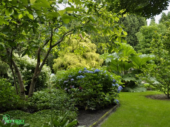 niebieska hortensja na żółtym tle ogród botanicznyIPROJEKT